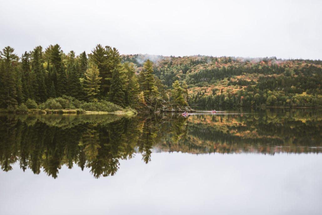 корпоратив на природе в лесу